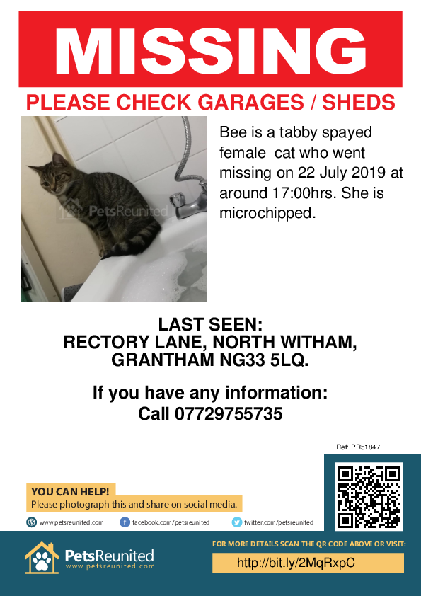 Lost pet poster - Lost cat: Tabby cat called Bee