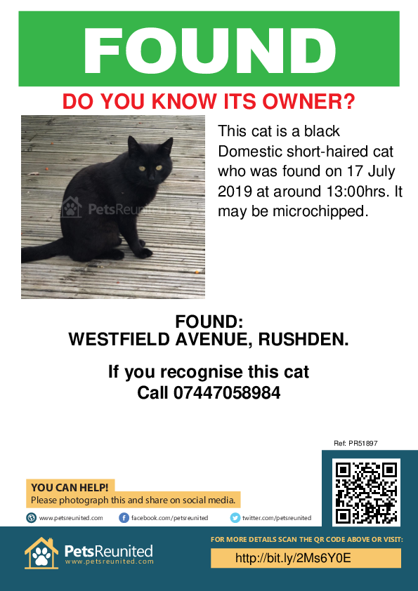 Found pet poster - Found cat: Black cat
