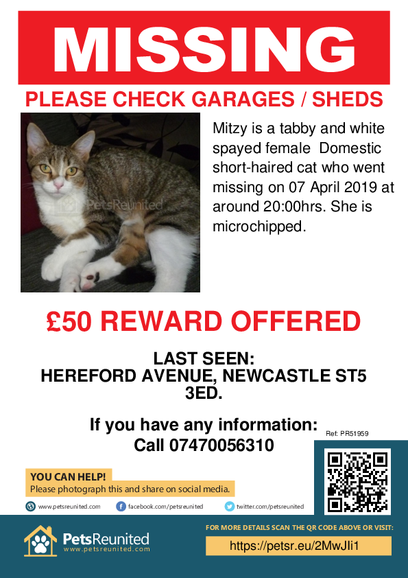 Lost pet poster - Lost cat: Tabby and white cat called Mitzy