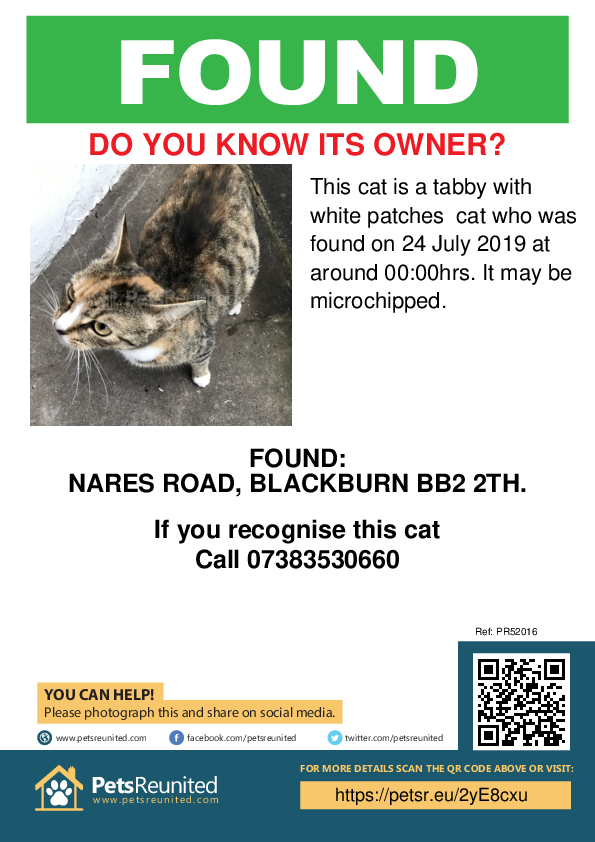 Found pet poster - Found cat: Tabby with white patches cat