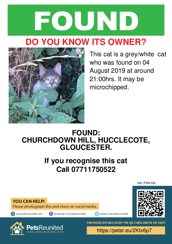 Found pet poster - Found cat: grey/white cat