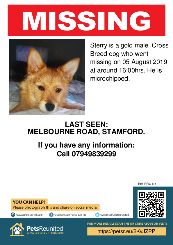 Lost pet poster - Lost dog: Gold dog called Sterry