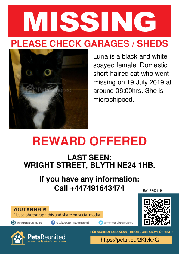 Lost pet poster - Lost cat: Black and white cat called Luna