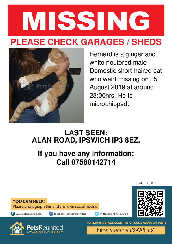 Lost pet poster - Lost cat: Ginger and white cat called Bernard