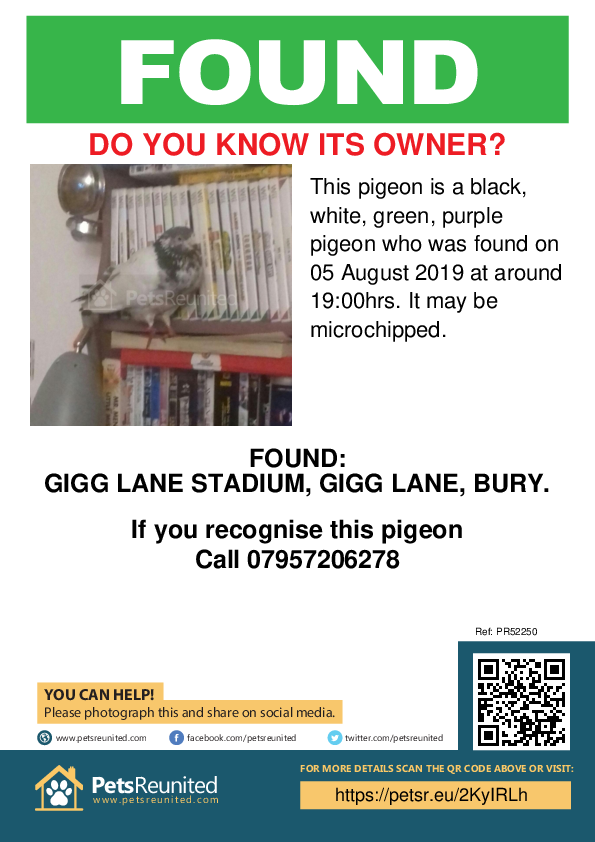 Found pet poster - Found pigeon: Grey and white  pigeon