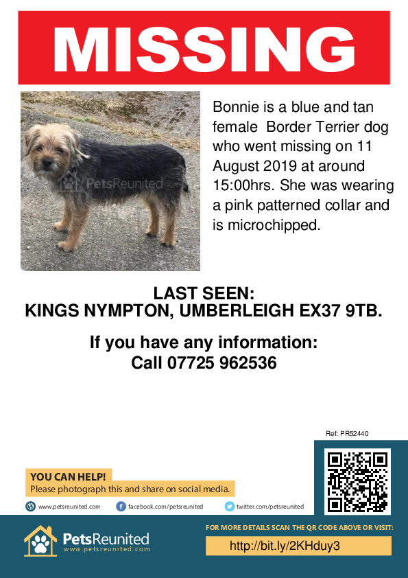 Lost pet poster - Lost dog: Blue and Tan Border Terrier dog called Bonnie
