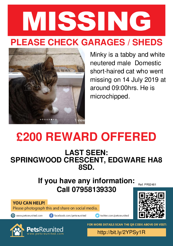 Lost pet poster - Lost cat: Tabby and white cat called Minky
