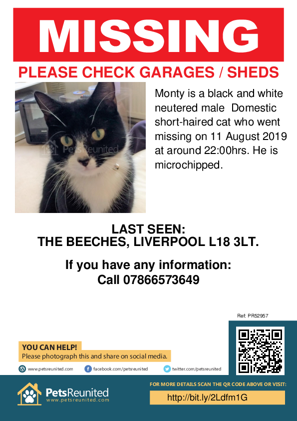 Lost pet poster - Lost cat: Black and white cat called Monty