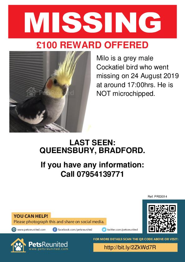 Lost pet poster - Lost bird: Grey Cockatiel bird called Milo