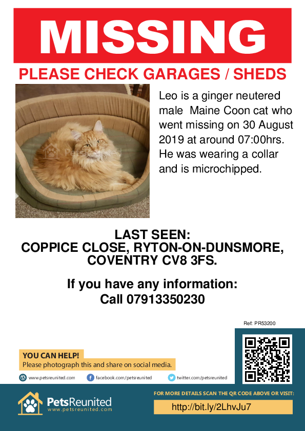 Lost pet poster - Lost cat: ginger Maine Coon cat called Leo