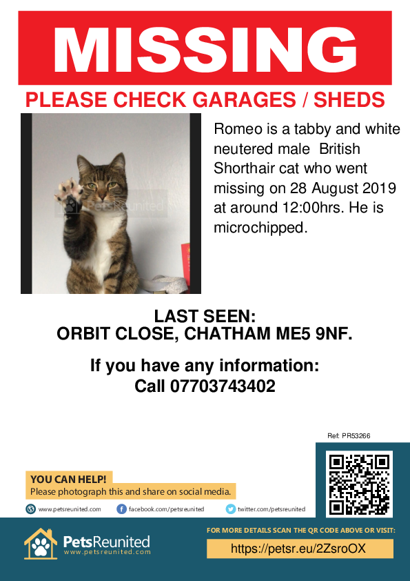 Lost pet poster - Lost cat: Tabby and white British Shorthair cat called Romeo