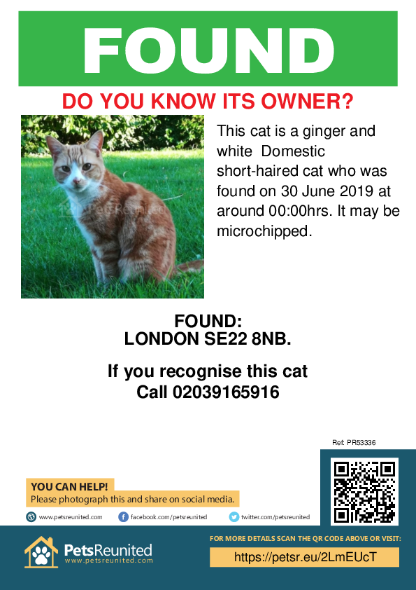 Found pet poster - Found cat: Ginger and white cat