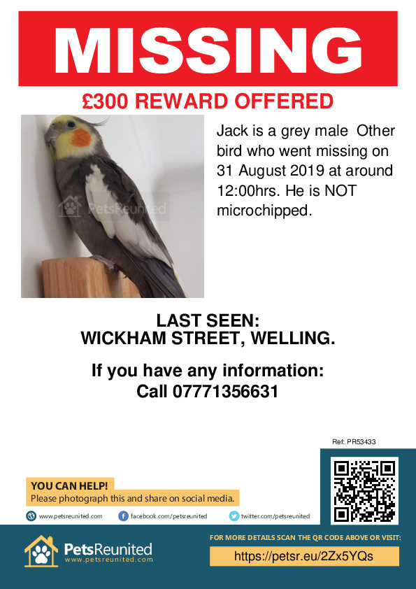 Lost pet poster - Lost bird: Grey Other bird called Jack