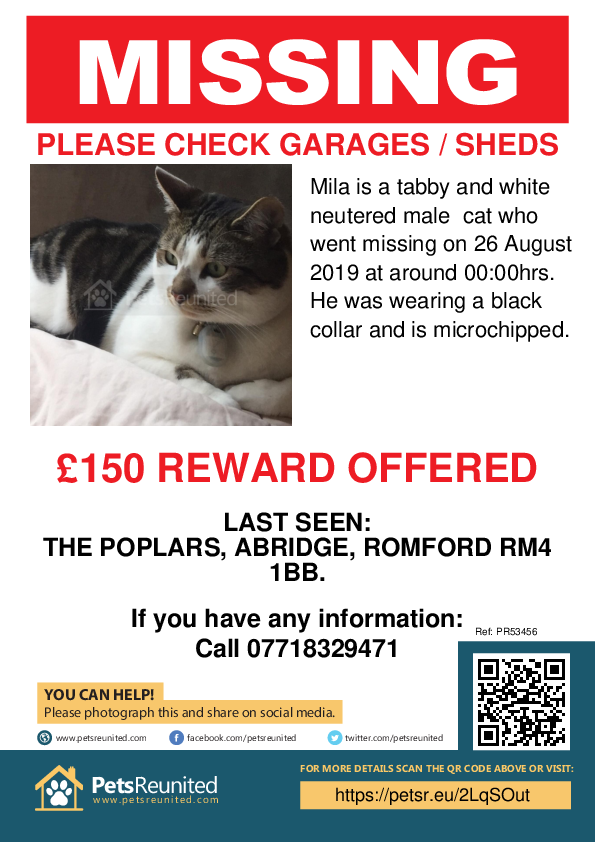Lost pet poster - Lost cat: Tabby and white cat called Mila