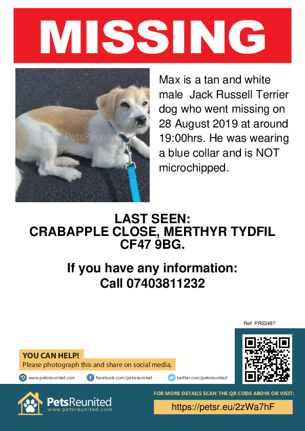 Lost pet poster - Lost dog: Tan and White Jack Russell Terrier dog called Max