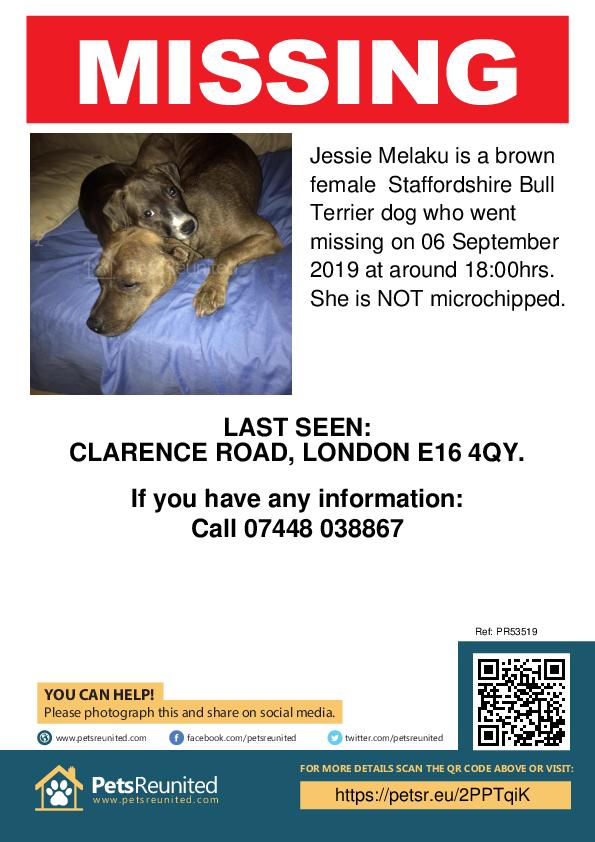 Lost pet poster - Lost dog: Brown Staffordshire Bull Terrier dog called Jessie Melaku