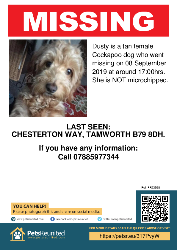 Lost pet poster - Lost dog: Tan Cockapoo dog called Dusty