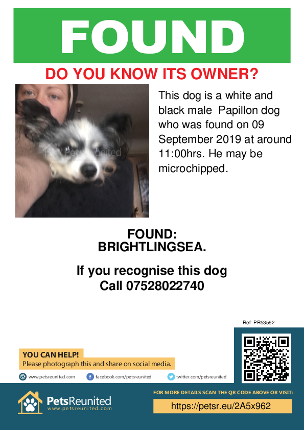 Found pet poster - Found dog: White and black Papillon dog