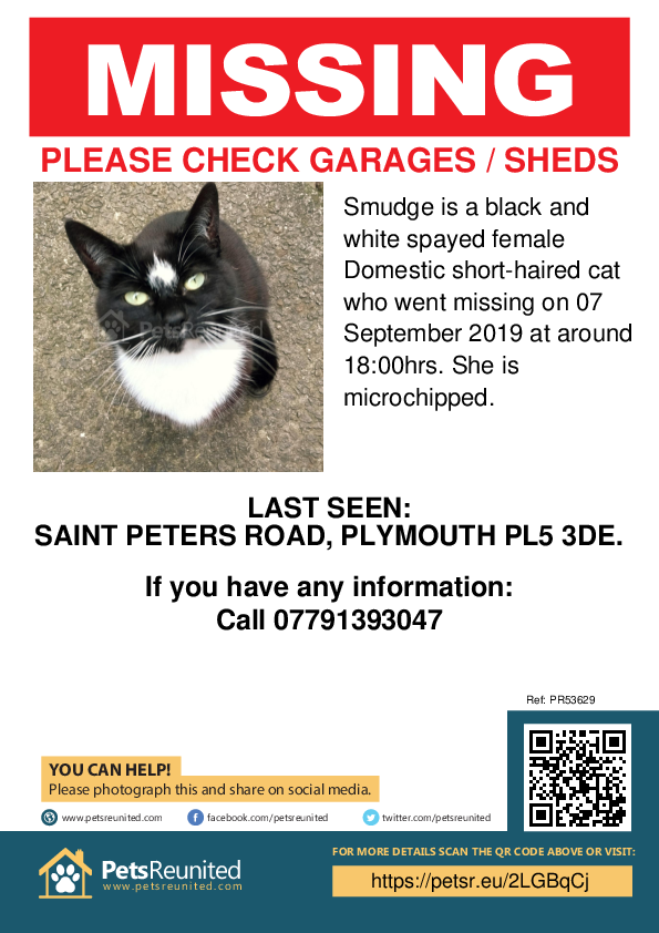 Lost pet poster - Lost cat: Black and white cat called Smudge