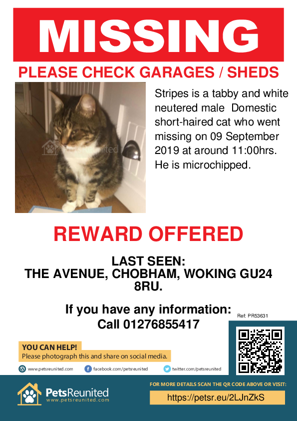 Lost pet poster - Lost cat: Tabby and white cat called Stripes