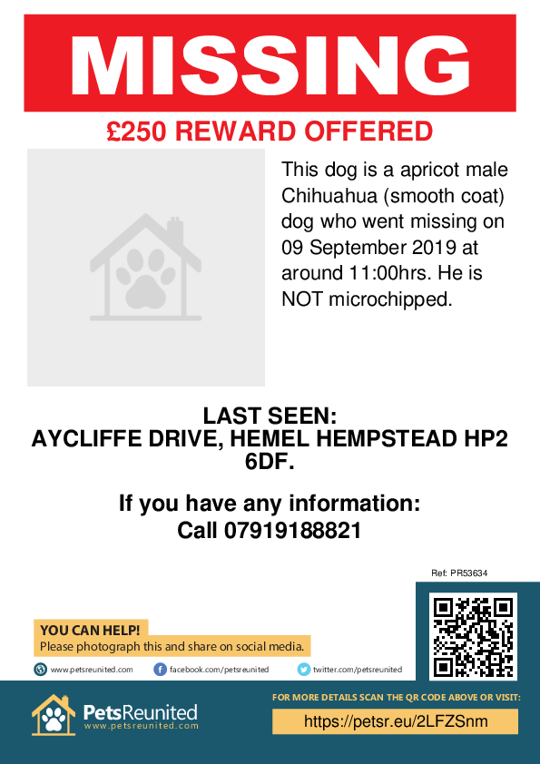 Lost pet poster - Lost dog: Apricot Chihuahua (smooth coat) dog [name witheld]