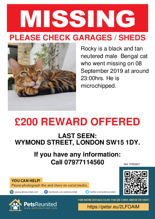 Lost pet poster - Lost cat: Black and Tan Bengal cat called Rocky