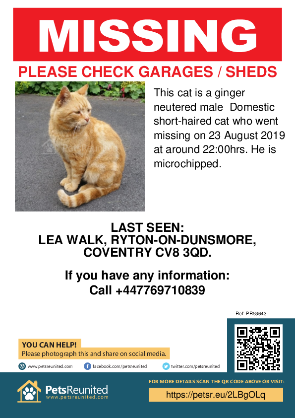 Lost pet poster - Lost cat: Ginger cat [name witheld]