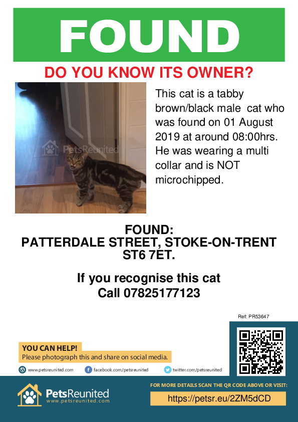 Found pet poster - Found cat: Tabby brown/black cat