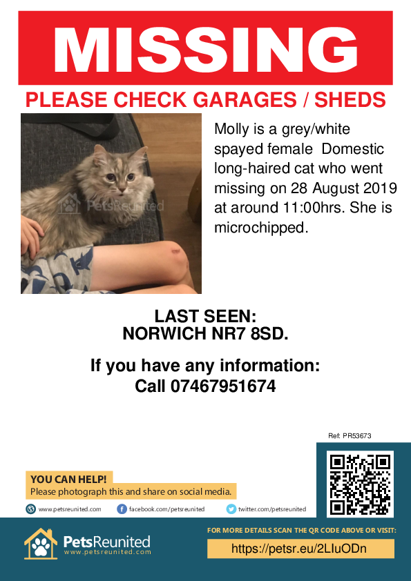 Lost pet poster - Lost cat: Grey/White cat called Molly