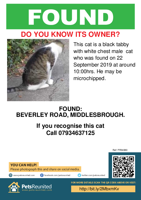 Found pet poster - Found deceased Black tabby with white chest cat