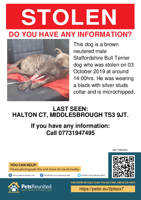 Stolen pet poster - Stolen dog: Brown Staffordshire Bull Terrier dog [name witheld]