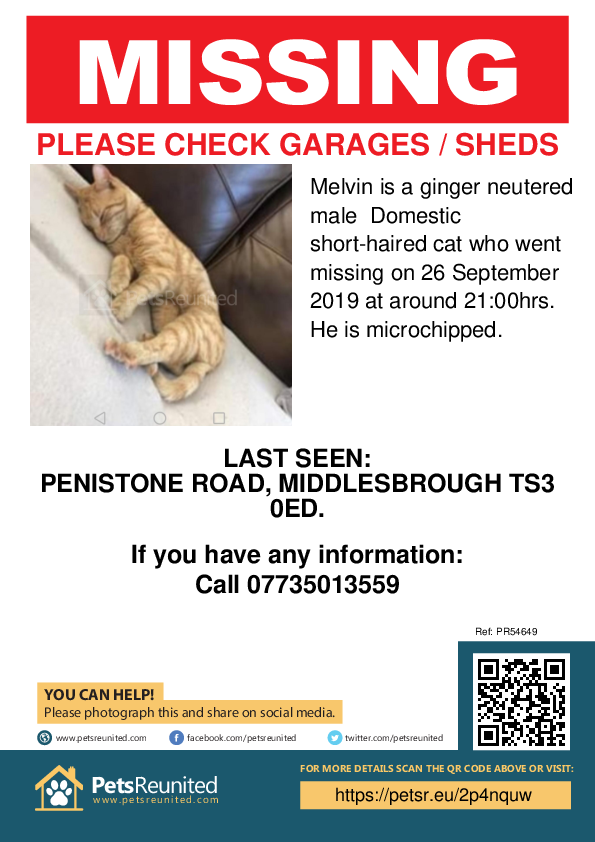 Lost pet poster - Lost cat: Ginger cat called Melvin
