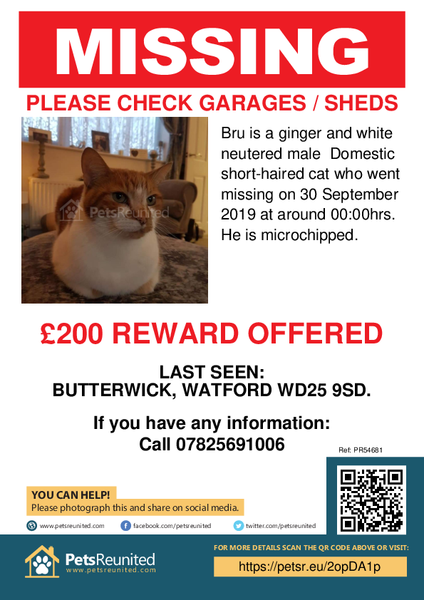 Lost pet poster - Lost cat: Ginger and white cat called Bru