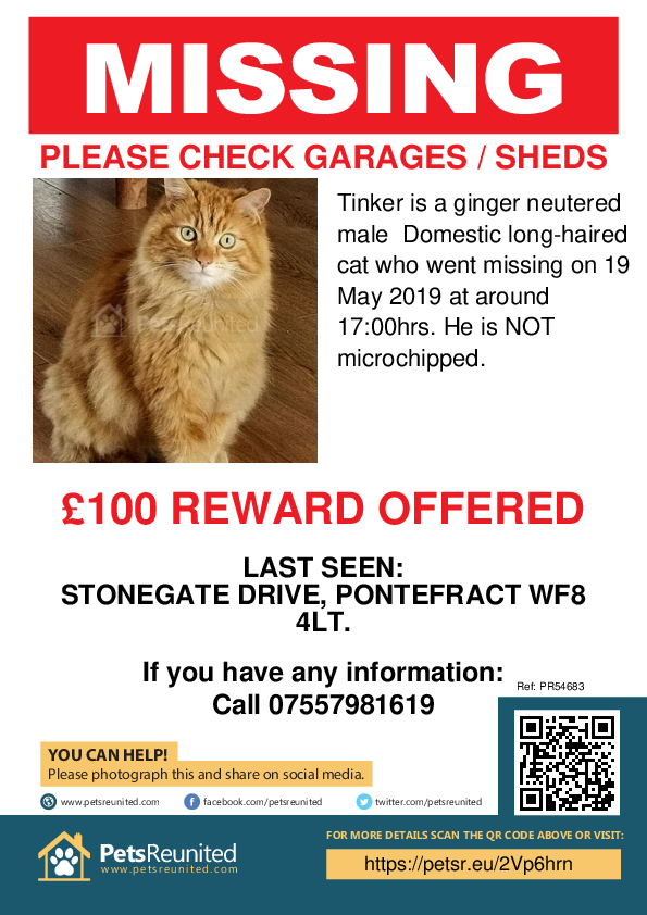 Lost pet poster - Lost cat: Ginger cat called Tinker