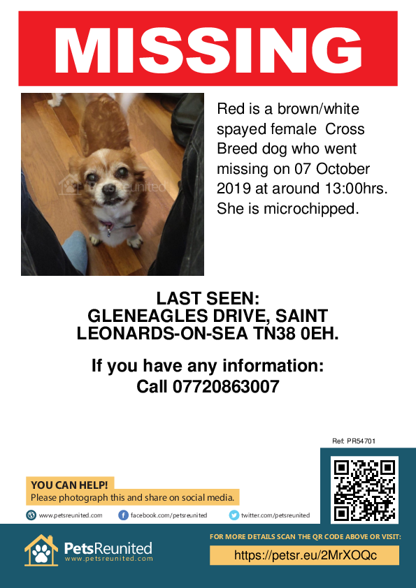 Lost pet poster - Lost dog: Brown/White dog called Red