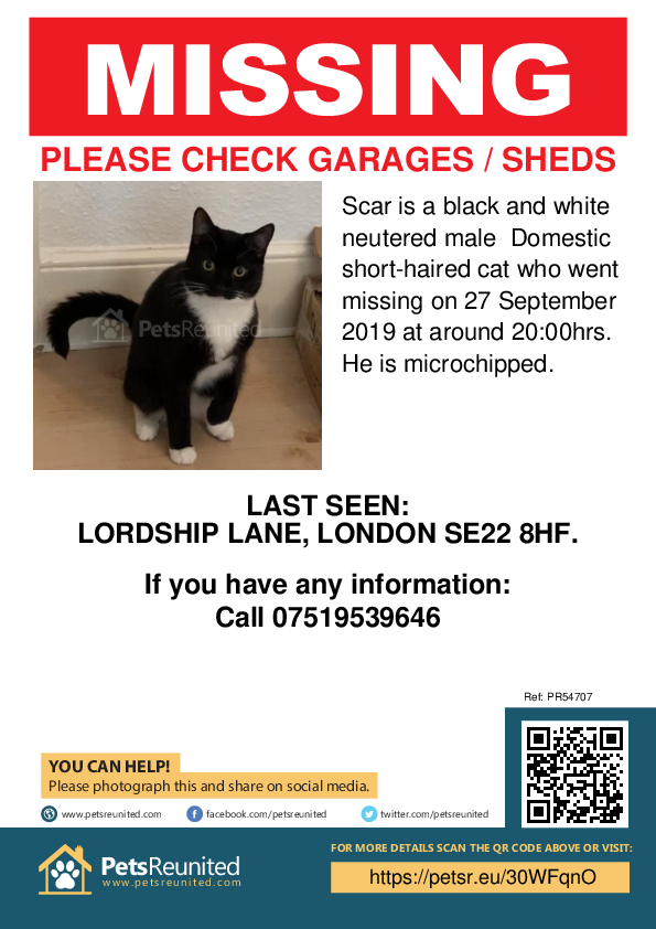 Lost pet poster - Lost cat: Black and white cat called Scar