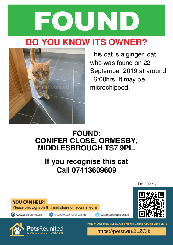 Found pet poster - Found cat: Ginger cat