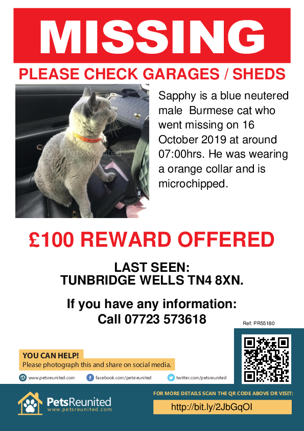 Lost pet poster - Lost cat: Blue Burmese cat called Sapphy