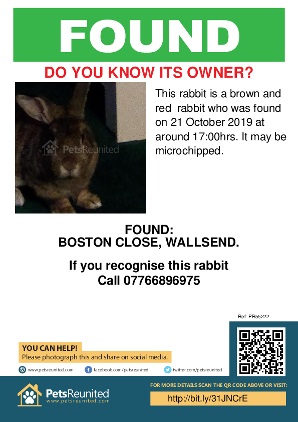 Found pet poster - Found rabbit: Brown and red rabbit