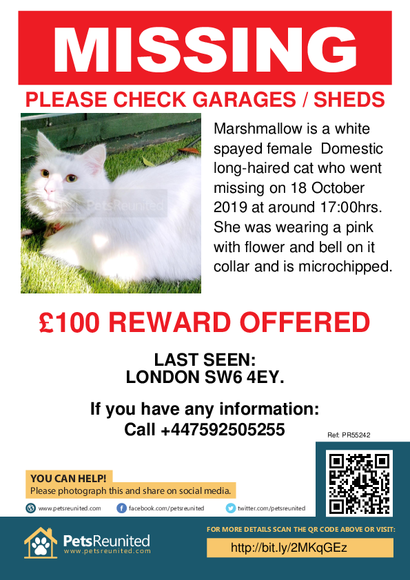 Lost pet poster - Lost cat: White cat called Marshmallow