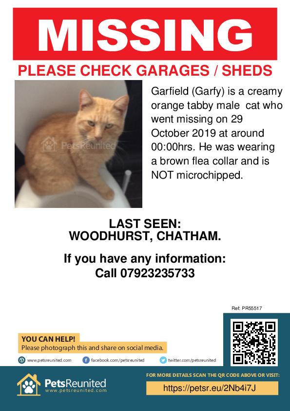 Lost pet poster - Lost cat: Creamy orange tabby cat called Garfield (Garfy)