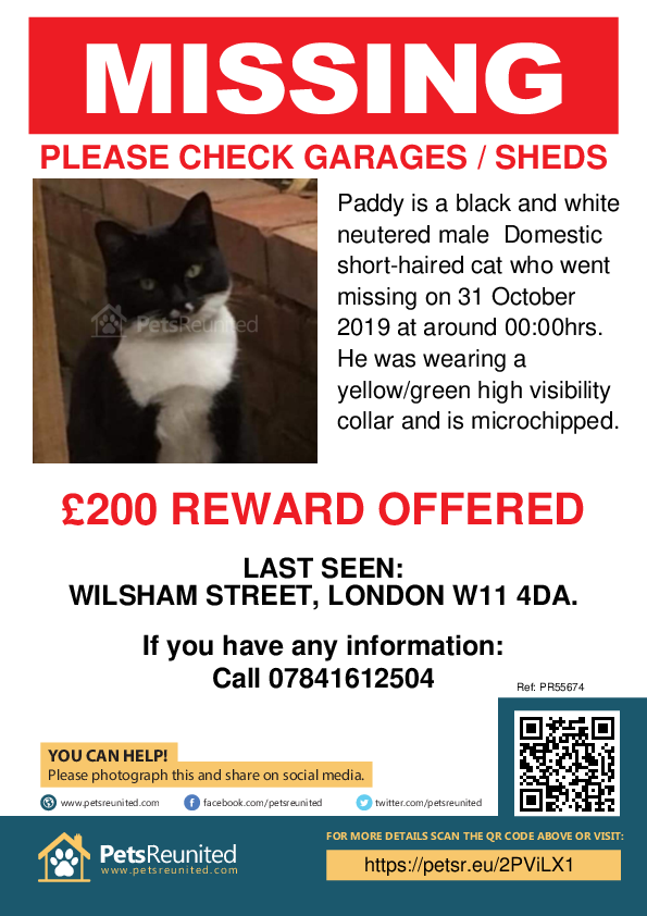 Lost pet poster - Lost cat: Black and white cat called Paddy