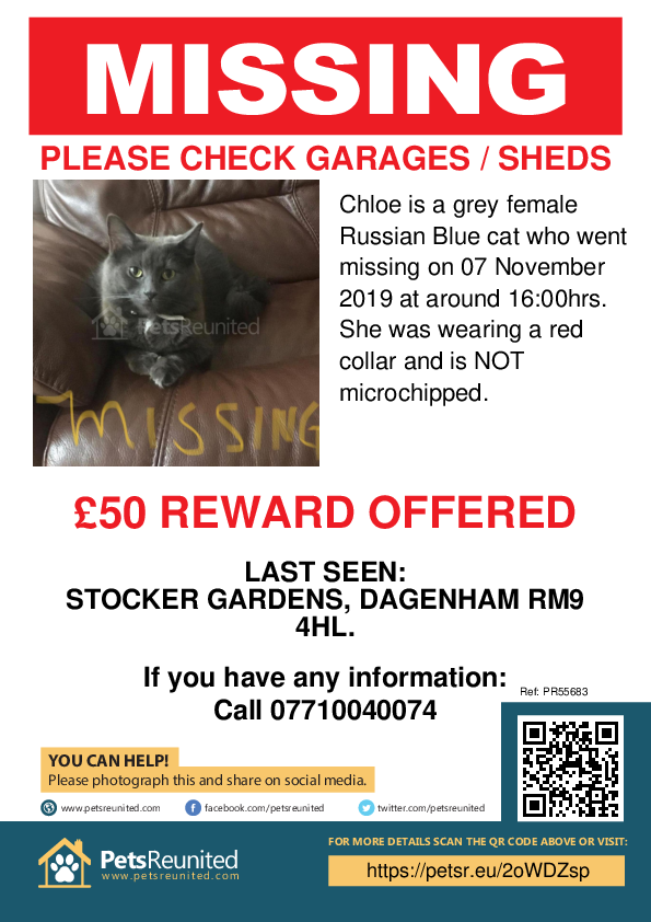 Lost pet poster - Lost cat: Grey Russian Blue cat called Chloe