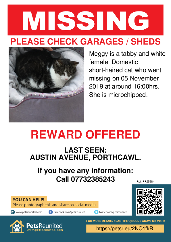 Lost pet poster - Lost cat: Tabby and white cat called Meggy