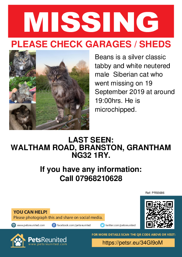 Lost pet poster - Lost cat: Silver classic tabby and white Siberian cat called Beans