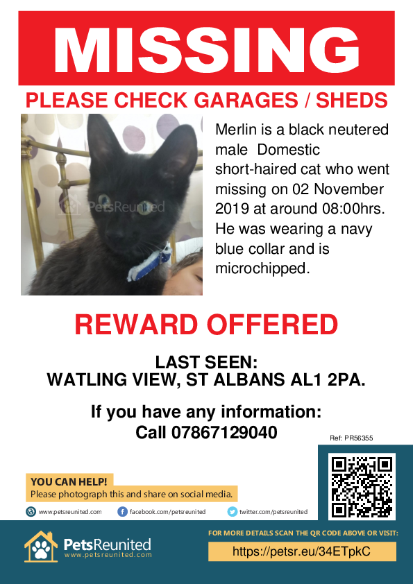 Lost pet poster - Lost cat: Black cat called Merlin