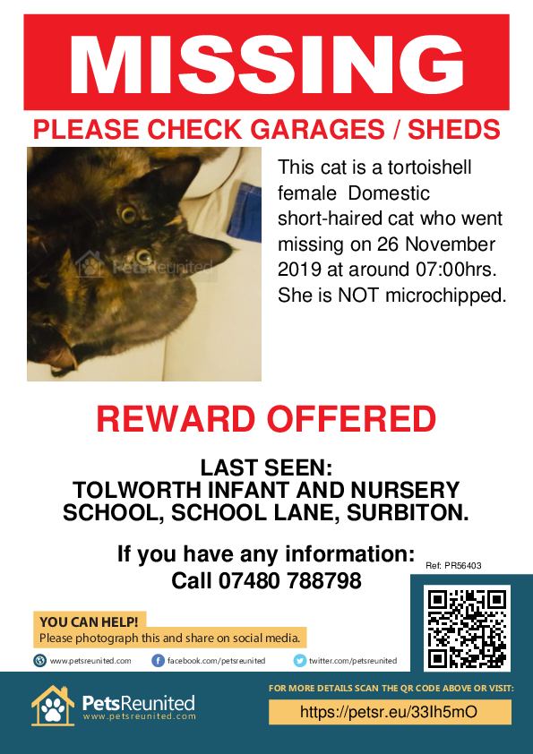 Lost pet poster - Lost cat: Tortoishell cat [name witheld]
