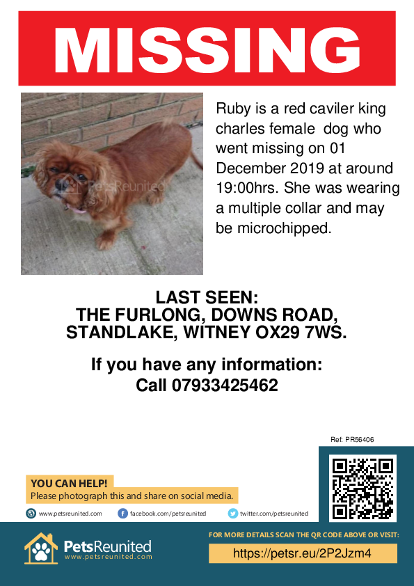 Lost pet poster - Lost dog: Red caviler king Charles dog called Ruby