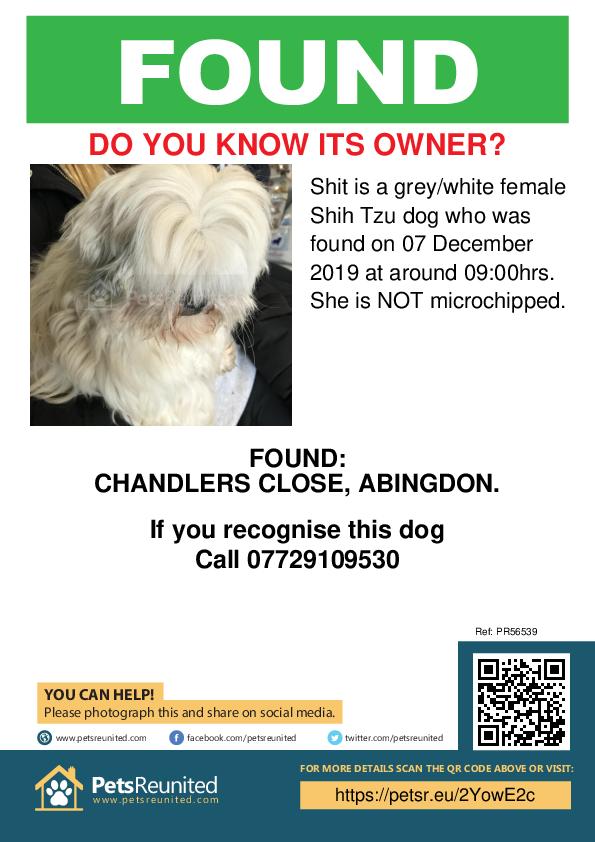 Found pet poster - Found dog: Grey/White Shih Tzu dog