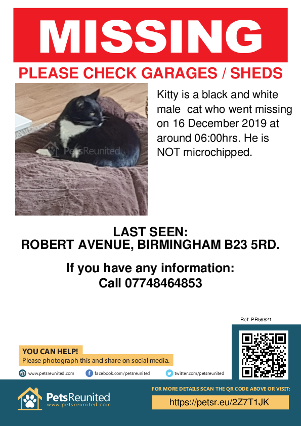 Lost pet poster - Lost cat: Black and white cat called Kitty